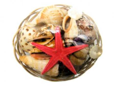 "8"" Basket of Shells"