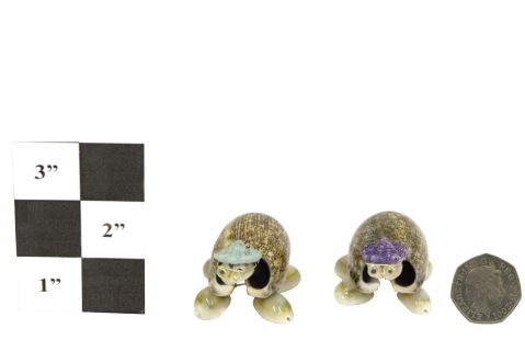 Nodding Shell Turtles
