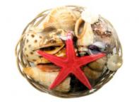 "4"" Basket of Shells"